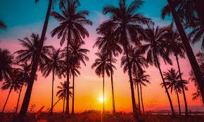 Palm trees in a sunset.