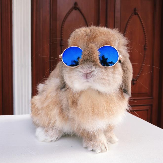 Bunny in Sunglasses.
